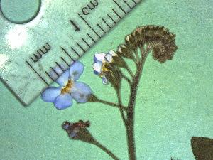 ( - TJD-199)  @11 [ ] CreativeCommons - Attribution Non-Commercial (2013) MTMG McGill Herbarium