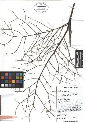 ( - TJD-467)  @11 [ ] CreativeCommons - Attribution Non-Commercial (2013) MTMG McGill Herbarium