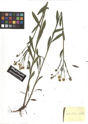 ( - TJD-235)  @11 [ ] CreativeCommons - Attribution Non-Commercial (2013) MTMG McGill Herbarium