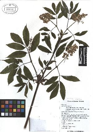 ( - TJD-025)  @11 [ ] CreativeCommons - Attribution Non-Commercial (2013) MTMG McGill Herbarium
