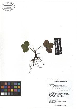 ( - TJD-027)  @11 [ ] CreativeCommons - Attribution Non-Commercial (2013) MTMG McGill Herbarium