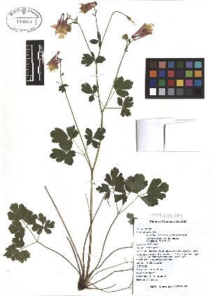 ( - TJD-038)  @11 [ ] CreativeCommons - Attribution Non-Commercial (2013) MTMG McGill Herbarium