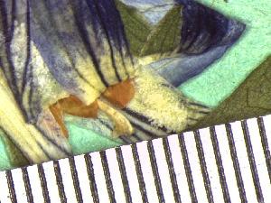 ( - TJD-044)  @11 [ ] CreativeCommons - Attribution Non-Commercial (2013) MTMG McGill Herbarium