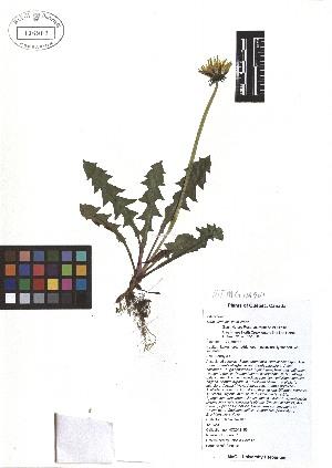 ( - TJD-049)  @11 [ ] CreativeCommons - Attribution Non-Commercial (2013) MTMG McGill Herbarium