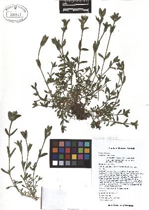 ( - TJD-056)  @11 [ ] CreativeCommons - Attribution Non-Commercial (2013) MTMG McGill Herbarium