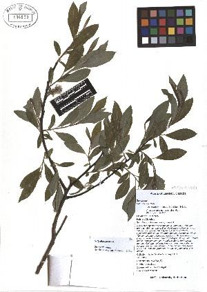 ( - TJD-067)  @11 [ ] CreativeCommons - Attribution Non-Commercial (2013) MTMG McGill Herbarium