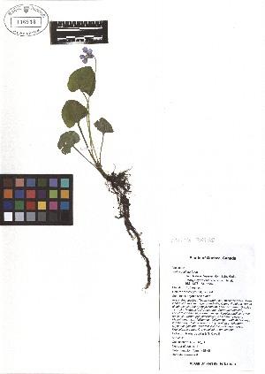 ( - TJD-076)  @11 [ ] CreativeCommons - Attribution Non-Commercial (2013) MTMG McGill Herbarium