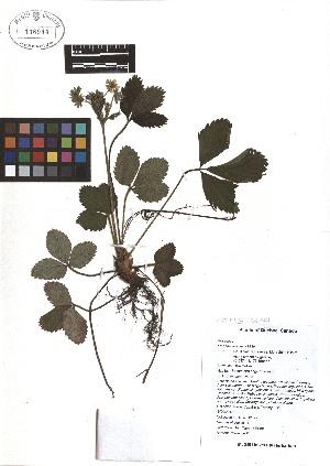 ( - TJD-081)  @11 [ ] CreativeCommons - Attribution Non-Commercial (2013) MTMG McGill Herbarium