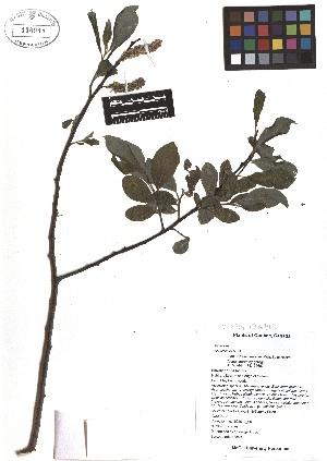 ( - TJD-082)  @11 [ ] CreativeCommons - Attribution Non-Commercial (2013) MTMG McGill Herbarium