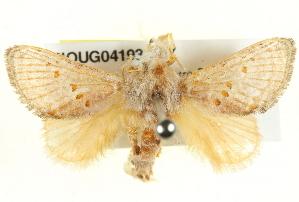 (Pseudanapaea - BIOUG04193-E07)  @15 [ ] CreativeCommons - Attribution Non-Commercial Share-Alike (2012) BIO Photography Group Biodiversity Institute of Ontario