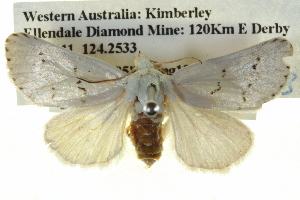 (Stiriinae - BIOUG05071-H06)  @14 [ ] CreativeCommons - Attribution Non-Commercial Share-Alike (2013) BIO Photography Group Biodiversity Institute of Ontario