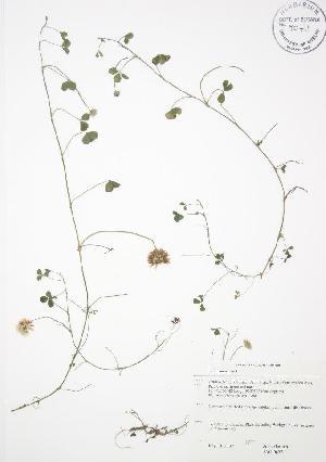( - JAG 0623WP)  @11 [ ] CreativeCommons - Attribution Share-Alike (2012) University of Guelph OAC BIO Herbarium