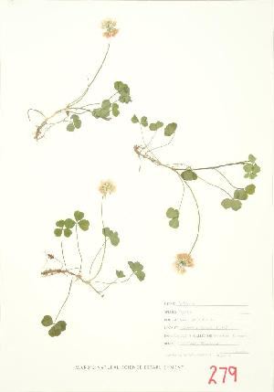 ( - MMD 020WP)  @11 [ ] CreativeCommons - Attribution Share-Alike (2012) University of Guelph OAC BIO Herbarium