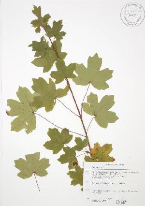 ( - JAG 0348WP)  @11 [ ] CreativeCommons - Attribution Share-Alike (2012) University of Guelph OAC BIO Herbarium