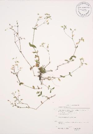 ( - JAG 0194WP)  @11 [ ] CreativeCommons – Attribution Share-Alike (by-sa) (2012) University of Guelph OAC BIO Herbarium