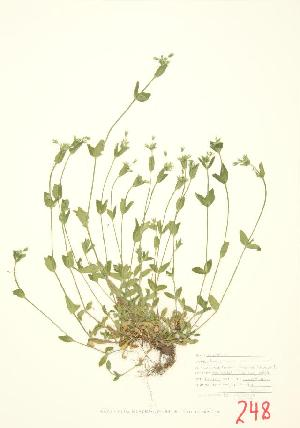 ( - JEM 007WP)  @11 [ ] CreativeCommons – Attribution Share-Alike (by-sa) (2012) University of Guelph OAC BIO Herbarium