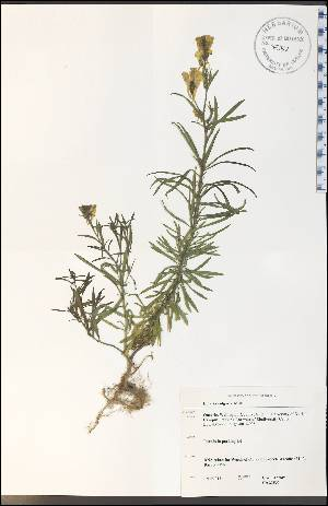( - CAL1837WP)  @11 [ ] by-nc-sa - Creative Commons - Attribution Non-Comm Share-Alike (2012) University of Guelph, Canada OAC-BIO Herbarium