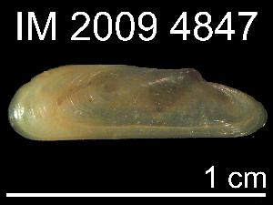 (Adipicola longissima - JL-250)  @13 [ ] Unspecified (default): All Rights Reserved  Unspecified Unspecified