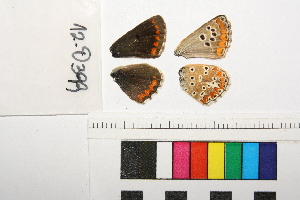 ( - RVcoll.13-S420)  @12 [ ] Butterfly Diversity and Evolution Lab (2014) Roger Vila Institute of Evolutionary Biology
