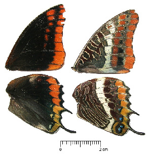 ( - RVcoll.13-S428)  @12 [ ] Butterfly Diversity and Evolution Lab (2014) Roger Vila Institute of Evolutionary Biology