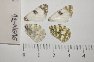 ( - RVcoll.13-S445)  @11 [ ] Butterfly Diversity and Evolution Lab (2014) Roger Vila Institute of Evolutionary Biology