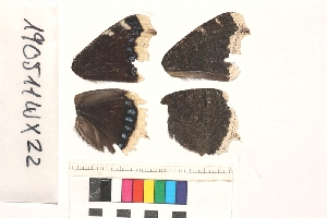 ( - RVcoll.190309FY22)  @11 [ ] Butterfly Diversity and Evolution Lab (2014) Roger Vila Institute of Evolutionary Biology