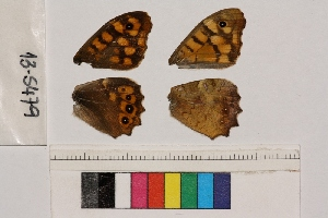 ( - RVcoll.13-S479)  @12 [ ] Butterfly Diversity and Evolution Lab (2014) Roger Vila Institute of Evolutionary Biology