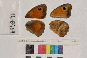 ( - RVcoll.14-B469)  @12 [ ] Butterfly Diversity and Evolution Lab (2014) Roger Vila Institute of Evolutionary Biology