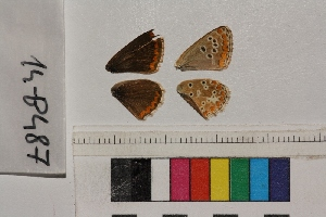 ( - RVcoll.14-B487)  @12 [ ] Butterfly Diversity and Evolution Lab (2014) Roger Vila Institute of Evolutionary Biology