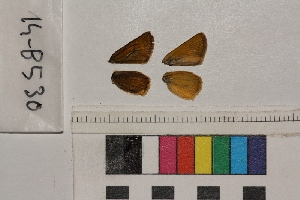( - RVcoll.14-B530)  @11 [ ] Butterfly Diversity and Evolution Lab (2014) Roger Vila Institute of Evolutionary Biology