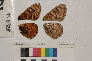 ( - RVcoll.14-D328)  @12 [ ] Butterfly Diversity and Evolution Lab (2014) Roger Vila Institute of Evolutionary Biology