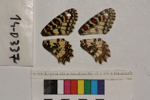 ( - RVcoll.14-D337)  @11 [ ] Butterfly Diversity and Evolution Lab (2014) Roger Vila Institute of Evolutionary Biology