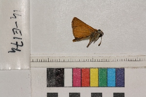 ( - RVcoll.14-E174)  @11 [ ] Butterfly Diversity and Evolution Lab (2014) Roger Vila Institute of Evolutionary Biology