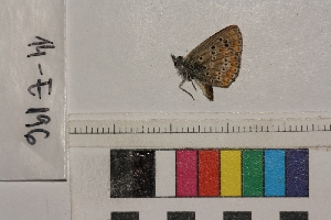 ( - RVcoll.14-E196)  @12 [ ] Butterfly Diversity and Evolution Lab (2014) Roger Vila Institute of Evolutionary Biology
