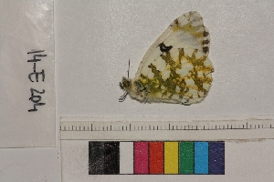 ( - RVcoll.14-E204)  @12 [ ] Butterfly Diversity and Evolution Lab (2014) Roger Vila Institute of Evolutionary Biology