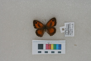 ( - RVcoll.LD-1145)  @11 [ ] Butterfly Diversity and Evolution Lab (2014) Roger Vila Institute of Evolutionary Biology