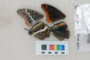 ( - RVcoll. 14-I376)  @11 [ ] Butterfly Diversity and Evolution Lab (2014) Roger Vila Institute of Evolutionary Biology