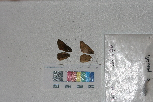 ( - RVcoll. 14-L179)  @12 [ ] Butterfly Diversity and Evolution Lab (2014) Roger Vila Institute of Evolutionary Biology