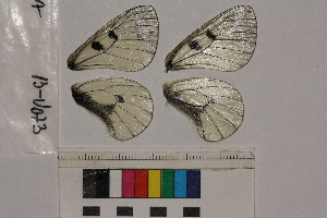 ( - RVcoll.13-U073)  @11 [ ] Butterfly Diversity and Evolution Lab (2014) Roger Vila Institute of Evolutionary Biology