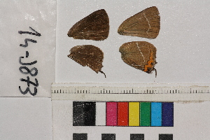 ( - RVcoll.14-J873)  @11 [ ] Butterfly Diversity and Evolution Lab (2014) Roger Vila Institute of Evolutionary Biology