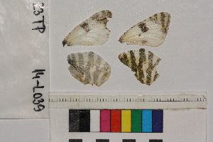 ( - RVcoll.14-L039)  @11 [ ] Butterfly Diversity and Evolution Lab (2014) Roger Vila Institute of Evolutionary Biology