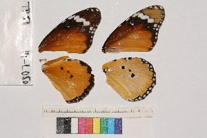 ( - RVcoll.14-L050)  @12 [ ] Butterfly Diversity and Evolution Lab (2014) Roger Vila Institute of Evolutionary Biology