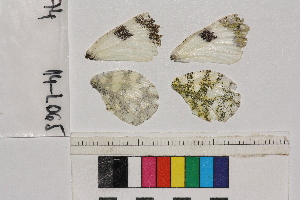 ( - RVcoll.14-L065)  @11 [ ] Butterfly Diversity and Evolution Lab (2014) Roger Vila Institute of Evolutionary Biology