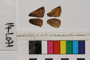 ( - RVcoll.14-L071)  @11 [ ] Butterfly Diversity and Evolution Lab (2014) Roger Vila Institute of Evolutionary Biology