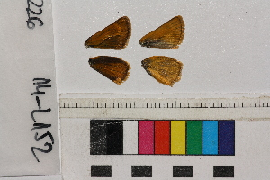 ( - RVcoll.14-L152)  @11 [ ] Butterfly Diversity and Evolution Lab (2014) Roger Vila Institute of Evolutionary Biology