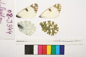 ( - RVcoll.08-J344)  @11 [ ] Copyright (2014) Roger Vila Institute of Evolutionary Biology