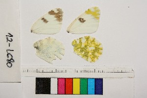 ( - RVcoll.140406MS2)  @12 [ ] Butterfly Diversity and Evolution Lab (2014) Roger Vila Institute of Evolutionary Biology