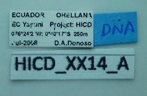 (Camponotus sp7 - HICD_XX14_A)  @11 [ ] CreativeCommons (2016) David Donoso Universidad de Cuenca