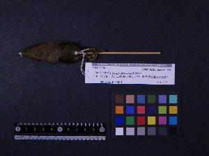 ( - 1996-0317)  @12 [ ] Copyright (2013) Takema  Saitoh Yamashina Institute for Ornithology