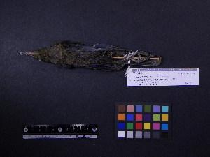 ( - 1998-0193)  @12 [ ] Copyright (2013) Takema  Saitoh Yamashina Institute for Ornithology